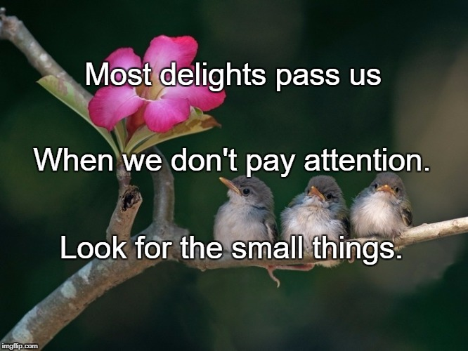 Most delights pass us Look for the small things. When we don't pay attention. | image tagged in 3 baby birds branch flower | made w/ Imgflip meme maker