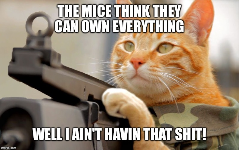 THE MICE THINK THEY CAN OWN EVERYTHING WELL I AIN'T HAVIN THAT SHIT! | image tagged in army cat | made w/ Imgflip meme maker