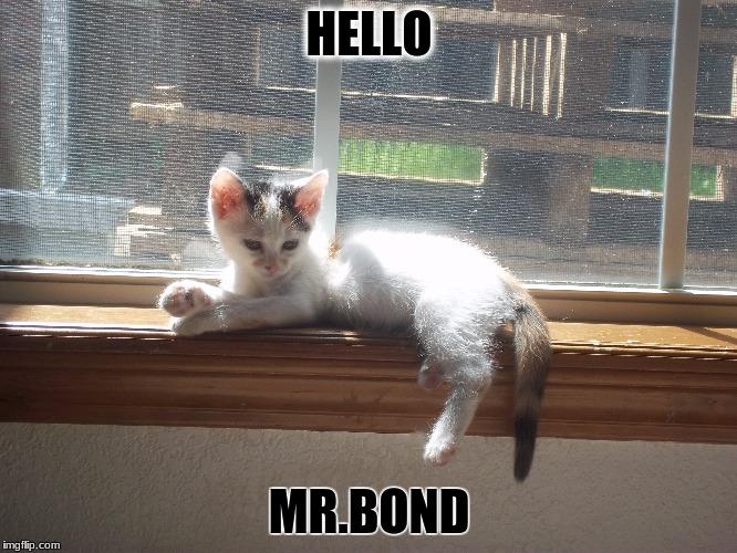evil adorable kitten name princess aka the cat the bad guy turns around with | HELLO MR.BOND | image tagged in evil,james bond,cat,calico cat,fluffy,cute | made w/ Imgflip meme maker
