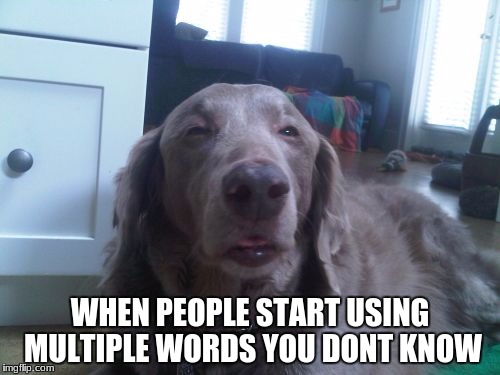 High Dog | WHEN PEOPLE START USING MULTIPLE WORDS YOU DONT KNOW | image tagged in memes,high dog | made w/ Imgflip meme maker