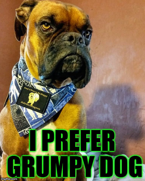 Grumpy Dog | I PREFER GRUMPY DOG | image tagged in grumpy dog | made w/ Imgflip meme maker