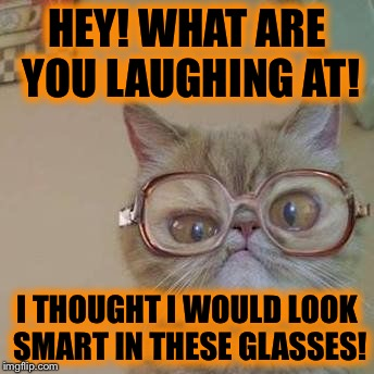 Funny Cat with Glasses |  HEY! WHAT ARE YOU LAUGHING AT! I THOUGHT I WOULD LOOK SMART IN THESE GLASSES! | image tagged in funny cat with glasses | made w/ Imgflip meme maker