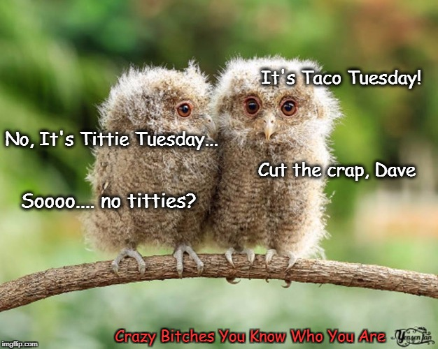 It's Taco Tuesday! Crazy B**ches You Know Who You Are No, It's Tittie Tuesday... Cut the crap, Dave Soooo.... no titties? | image tagged in taco tuesday,owls | made w/ Imgflip meme maker
