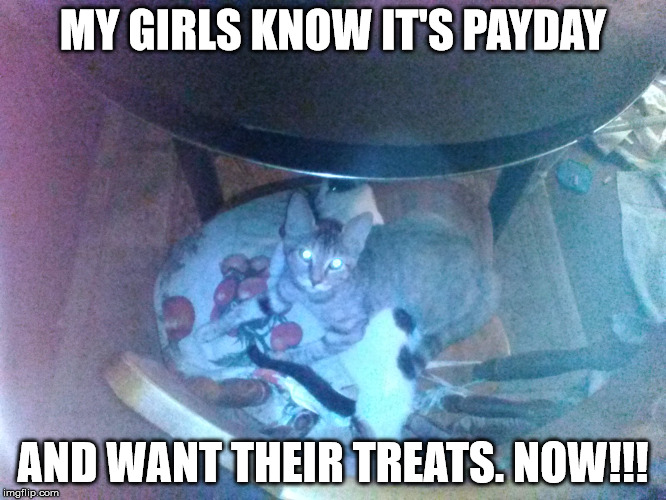 MY GIRLS KNOW IT'S PAYDAY AND WANT THEIR TREATS. NOW!!! | made w/ Imgflip meme maker
