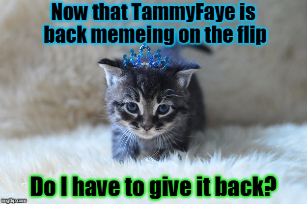 for I gladly would |  Now that TammyFaye is back memeing on the flip; Do I have to give it back? | image tagged in memes,tammyfaye,memeing,kitten,queen,imgflip users | made w/ Imgflip meme maker