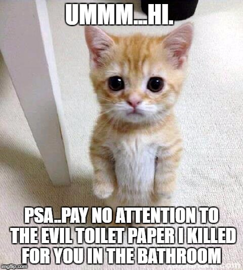 Cute Cat Meme | UMMM...HI. PSA..PAY NO ATTENTION TO THE EVIL TOILET PAPER I KILLED FOR YOU IN THE BATHROOM | image tagged in memes,cute cat | made w/ Imgflip meme maker