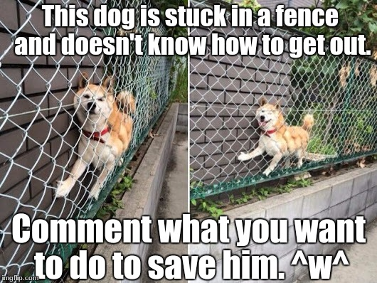 I'm back from 4 months in the dark! How's everyone while I was gone? =3 | This dog is stuck in a fence and doesn't know how to get out. Comment what you want to do to save him. ^w^ | image tagged in doge stuck on fence,funny,sellout,memes,doge | made w/ Imgflip meme maker