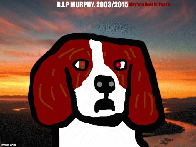 Rest In Peace Murphy, I Loved You | image tagged in may he rest in peace,murphy,rip,for a important person,for my dead dog | made w/ Imgflip meme maker