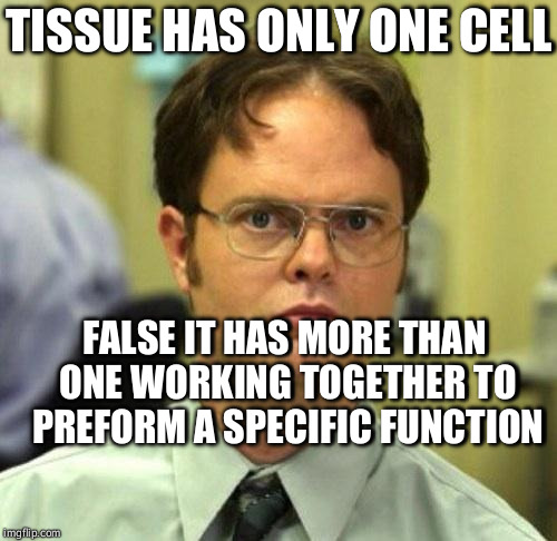 False | TISSUE HAS ONLY ONE CELL FALSE IT HAS MORE THAN ONE WORKING TOGETHER TO PREFORM A SPECIFIC FUNCTION | image tagged in false | made w/ Imgflip meme maker