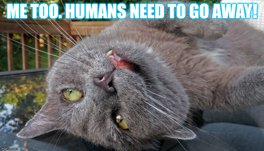 Faded Cat | ME TOO. HUMANS NEED TO GO AWAY! | image tagged in faded cat | made w/ Imgflip meme maker