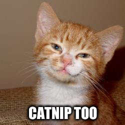 CATNIP TOO | made w/ Imgflip meme maker