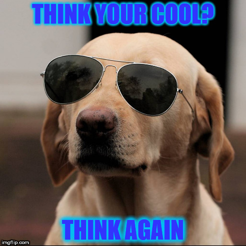 COOL DOUGE | THINK YOUR COOL? THINK AGAIN | image tagged in funny dogs | made w/ Imgflip meme maker