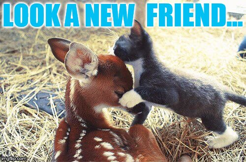 Unusual Friends | LOOK A NEW FRIEND... | image tagged in memes,cat memes,cat,deer,new,friends | made w/ Imgflip meme maker