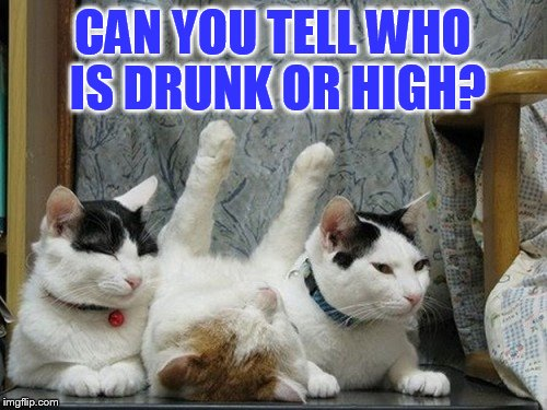 Have To Be Different | CAN YOU TELL WHO IS DRUNK OR HIGH? | image tagged in memes,cat memes,cats,and now for something completely different,drunk cat,high as fuck | made w/ Imgflip meme maker