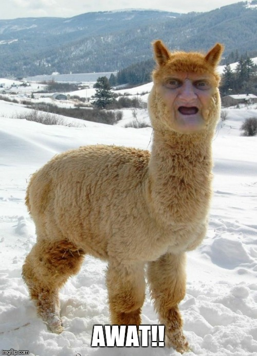 Wat Alpaca | AWAT!! | image tagged in alpaca,wat lady,funny memes,alpacalypse,cute animals | made w/ Imgflip meme maker