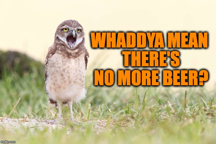 Browned Off Burrowing Owl | WHADDYA MEAN THERE'S NO MORE BEER? | image tagged in no mo' beer | made w/ Imgflip meme maker