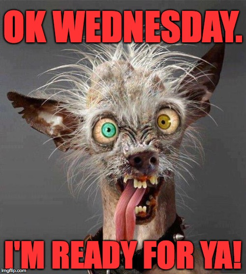 Let's git 'er done! | OK WEDNESDAY. I'M READY FOR YA! | image tagged in ugly dog 20 | made w/ Imgflip meme maker