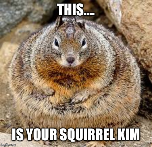 THIS.... IS YOUR SQUIRREL KIM | made w/ Imgflip meme maker