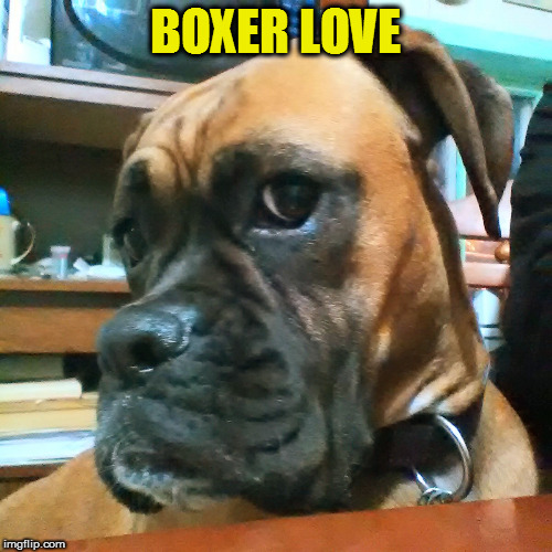 BOXER LOVE | made w/ Imgflip meme maker