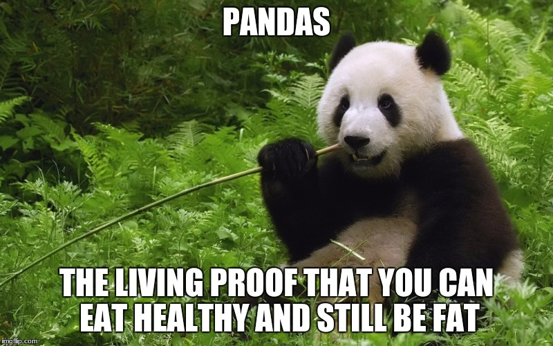 PANDAS THE LIVING PROOF THAT YOU CAN EAT HEALTHY AND STILL BE FAT | image tagged in pandas | made w/ Imgflip meme maker