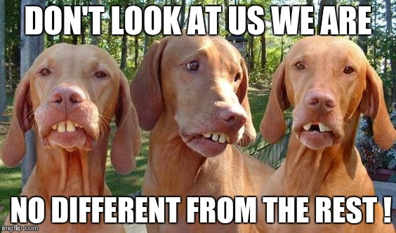 DON'T LOOK AT US WE ARE NO DIFFERENT FROM THE REST ! | image tagged in redneck dogs | made w/ Imgflip meme maker