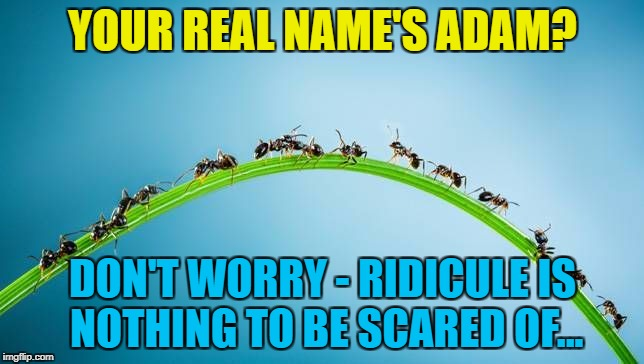 There's a reason he kept it quiet... :) | YOUR REAL NAME'S ADAM? DON'T WORRY - RIDICULE IS NOTHING TO BE SCARED OF... | image tagged in immigrant invading ants,memes,adam ant,music,animals,ants | made w/ Imgflip meme maker