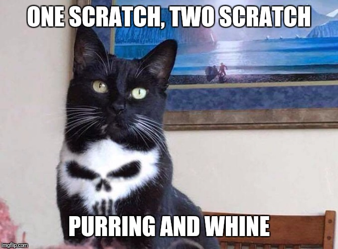 Punisher cat | ONE SCRATCH, TWO SCRATCH PURRING AND WHINE | image tagged in cats,punisher | made w/ Imgflip meme maker