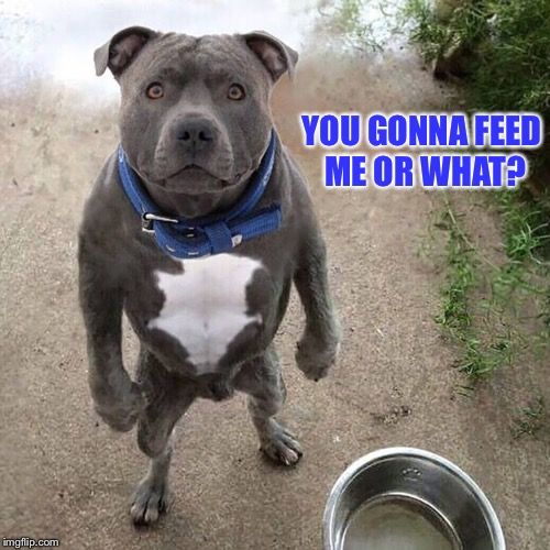 BAD DOG | YOU GONNA FEED ME OR WHAT? | image tagged in bad dog | made w/ Imgflip meme maker
