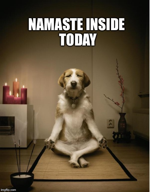 dog meditation funny | NAMASTE INSIDE TODAY | image tagged in dog meditation funny | made w/ Imgflip meme maker