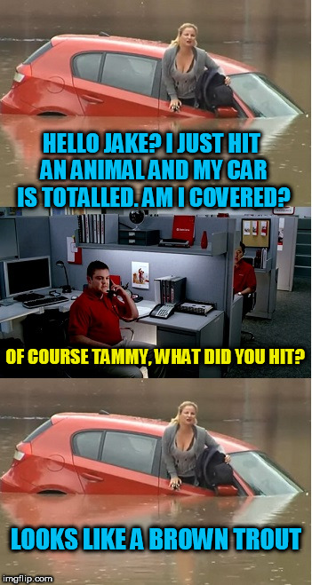 Time for my safe driving check.... | HELLO JAKE? I JUST HIT AN ANIMAL AND MY CAR IS TOTALLED. AM I COVERED? LOOKS LIKE A BROWN TROUT OF COURSE TAMMY, WHAT DID YOU HIT? | image tagged in jake from state farm | made w/ Imgflip meme maker