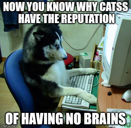 NOW YOU KNOW WHY CATSS HAVE THE REPUTATION OF HAVING NO BRAINS | made w/ Imgflip meme maker