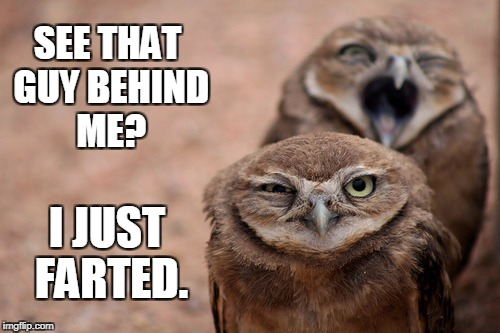 SEE THAT GUY BEHIND ME? I JUST FARTED. | image tagged in owls,funny owls,farts,farting,fart,funny face | made w/ Imgflip meme maker
