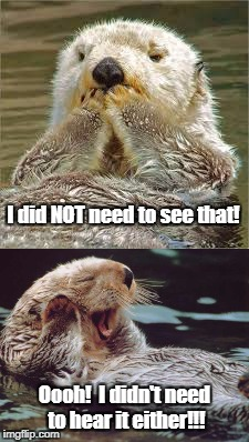 I did NOT need to see that! Oooh!  I didn't need to hear it either!!! | image tagged in tmi,otter,sea otter,funny animals,funny otter,seen too much | made w/ Imgflip meme maker