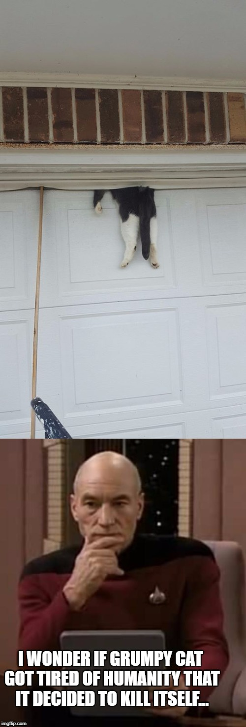 Some things are questionable | I WONDER IF GRUMPY CAT GOT TIRED OF HUMANITY THAT IT DECIDED TO KILL ITSELF... | image tagged in captain picard thinking,cat stuck in garage door | made w/ Imgflip meme maker