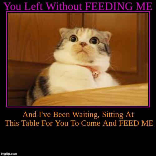 You Left Without FEEDING ME | And I've Been Waiting, Sitting At This Table For You To Come And FEED ME | image tagged in funny,demotivationals | made w/ Imgflip demotivational maker