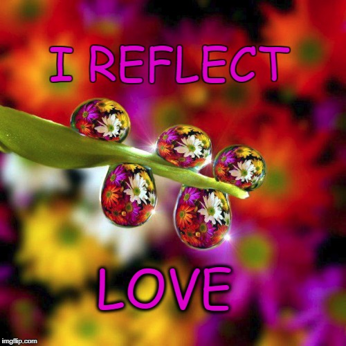 I reflect Love | I REFLECT LOVE | image tagged in zzzkatkreationszzz,flowers,love,reflection,daisy,spring daisy flowers | made w/ Imgflip meme maker