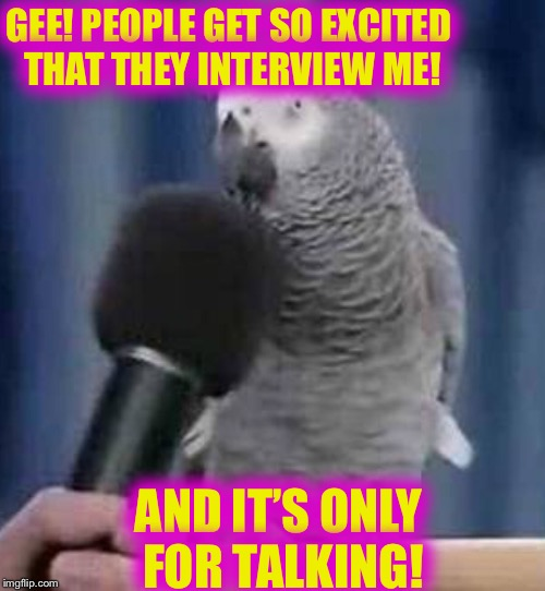No more interviews! | GEE! PEOPLE GET SO EXCITED THAT THEY INTERVIEW ME! AND IT'S ONLY FOR TALKING! | image tagged in birds,funny animal | made w/ Imgflip meme maker