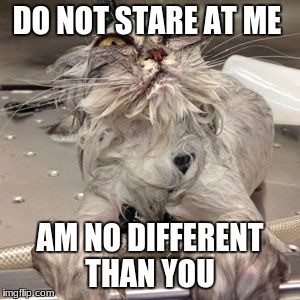 DO NOT STARE AT ME AM NO DIFFERENT THAN YOU | image tagged in ugly cat bath | made w/ Imgflip meme maker