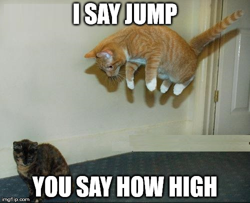 Jump Sucker | I SAY JUMP YOU SAY HOW HIGH | image tagged in funny cats,funny animals | made w/ Imgflip meme maker