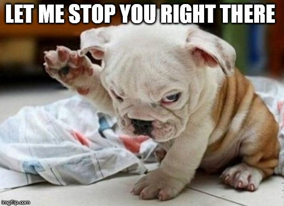 Stop Right There | LET ME STOP YOU RIGHT THERE | image tagged in angry dog | made w/ Imgflip meme maker