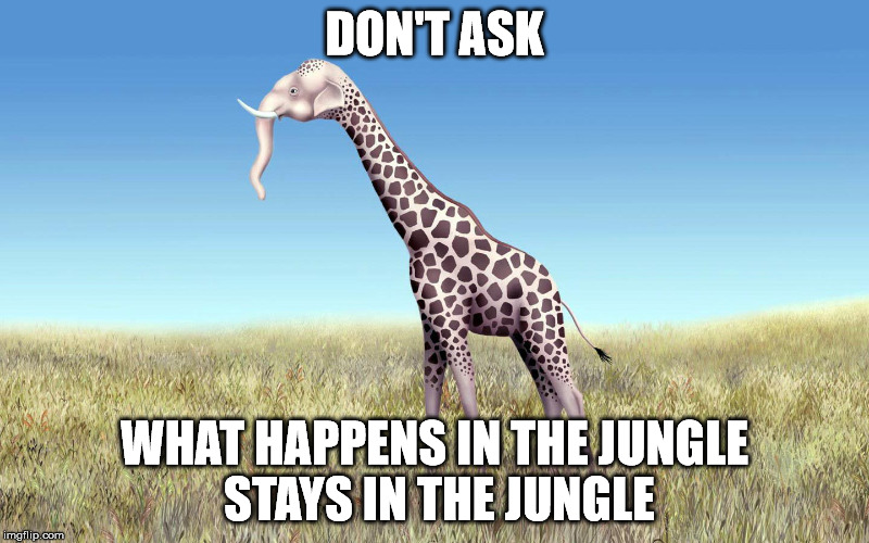 Jungle Love | DON'T ASK WHAT HAPPENS IN THE JUNGLE STAYS IN THE JUNGLE | image tagged in funny animals,jungle book | made w/ Imgflip meme maker