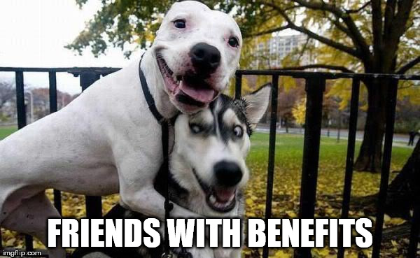 Friends With Benefits | FRIENDS WITH BENEFITS | image tagged in reservoir dogs,funny dogs | made w/ Imgflip meme maker
