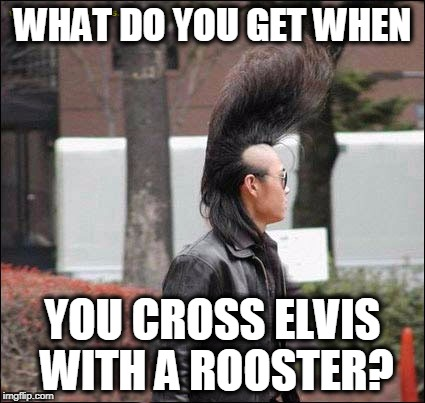 bad hair | WHAT DO YOU GET WHEN YOU CROSS ELVIS WITH A ROOSTER? | image tagged in bad hair day | made w/ Imgflip meme maker