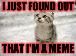 Sad Cat Meme | I JUST FOUND OUT THAT I'M A MEME | image tagged in memes,sad cat | made w/ Imgflip meme maker
