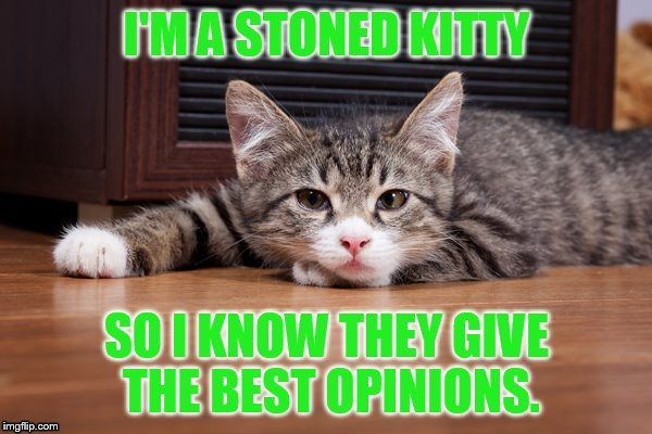 Best Opinions | 9 | image tagged in memes,stoned,cats,giving,best,opinions | made w/ Imgflip meme maker