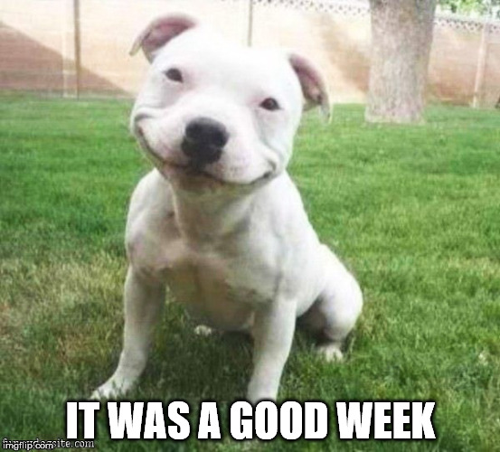 Good Week | IT WAS A GOOD WEEK | image tagged in dog week,cute dog | made w/ Imgflip meme maker