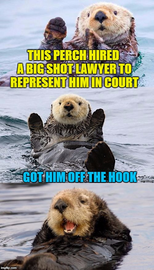 It was the otter guy |  THIS PERCH HIRED A BIG SHOT LAWYER TO REPRESENT HIM IN COURT; GOT HIM OFF THE HOOK | image tagged in bad pun otter,memes,lawyers,crook,court,fish | made w/ Imgflip meme maker