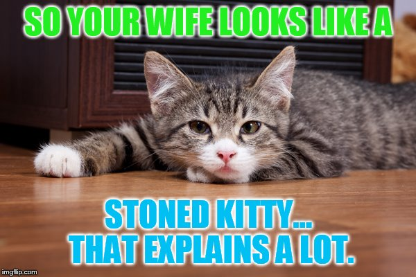 SO YOUR WIFE LOOKS LIKE A STONED KITTY... THAT EXPLAINS A LOT. | made w/ Imgflip meme maker