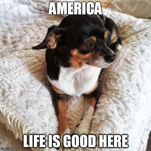 AMERICA LIFE IS GOOD HERE | image tagged in life is good | made w/ Imgflip meme maker