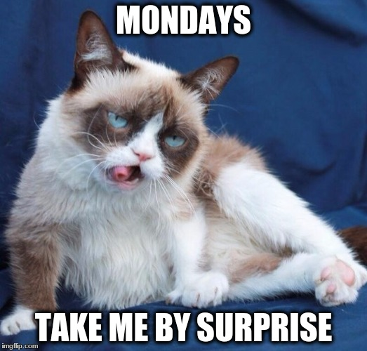 Grumpy cat drunk  | MONDAYS TAKE ME BY SURPRISE | image tagged in grumpy cat drunk | made w/ Imgflip meme maker